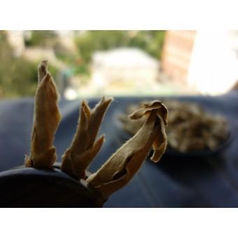 Я Бао — зимние почки дикорастущих чайных деревьев