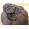 Черный шу пуэр закопчёный в грейпфруте (в разломе)