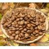 Кофе арабика Коста-Рика 100г. зерно