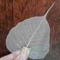 Купить Сито «Лист с дерева Бодхи»